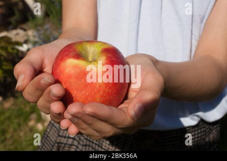Un bambino tiene una mela rossa matura nelle sue mani aperte Foto Stock