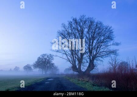 Una traccia accanto a un campo. Subito dopo il tramonto, come nebbia copre un campo nella campagna inglese. Upton Upon Severn, Worcestershire, Regno Unito Foto Stock