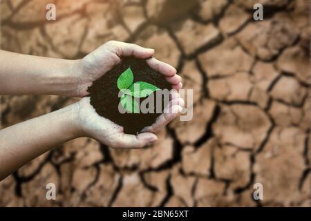 Vista dall'alto mani che tengono albero che cresce su terra incrinata. Ambiente di risparmio e concetto di conservazione naturale con la piantatura di alberi sulla terra verde del globo.