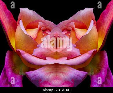 Surrealistico simmetrico rosa coloratissimo fantasia di un singolo isolato giallo rosa arancio viola fiore su sfondo nero