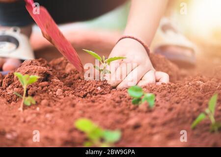 Ragazza asiatica piccola che piantano l'albero giovane di semina sul suolo nella mano del giardino vicino Foto Stock