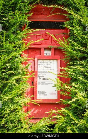 Primo piano di rurale, villaggio Royal Mail casella isolato all'aperto nascosto in eccesso leylandii siepe. Rosso, cassetta postale ER II, cassetta delle lettere, campagna britannica. Foto Stock