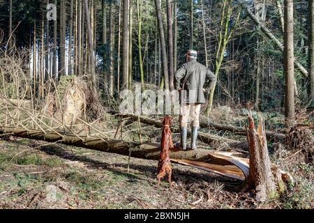 Un forestere si trova su un tronco di albero caduto ed esamina i danni che la tempesta ha causato nella foresta. Il cambiamento climatico minaccia le foreste europee. Foto Stock