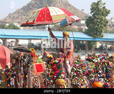 La concorrenza per decorare i cammelli a Pushkar camel fair