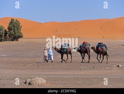 Autista di cammello in Marocco al deserto Erg Chebbi Foto Stock