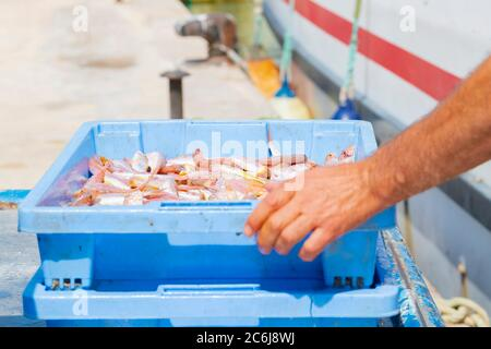 Primo piano di una scatola del mercato del pesce riempito di pesce che è messo in cima ad un altro da mani maschili fuori fuoco su uno sfondo fuori fuoco.