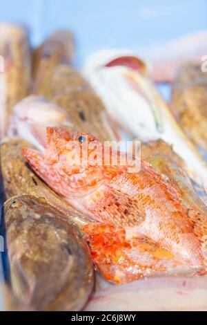 Primo piano di un pesce appena pescato in una scatola con alcuni pesci fuori fuoco su uno sfondo fuori fuoco. Concetto di pesca e occupazione.