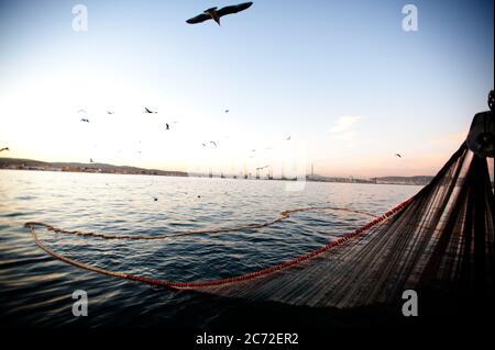 I gabbiani volano sulla rete da pesca cercando di ottenere qualche cattura mentre viene riissato alla barca da pesca Fernandez y Moreno. Foto Stock