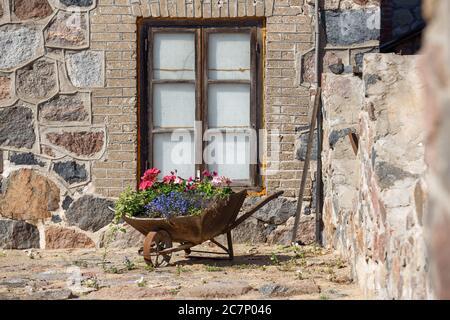 Città Plavinas, Lettonia. Carriola in metallo con fiori su Street.18.07.2020