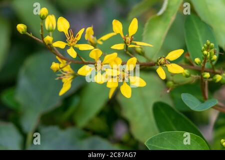 Bel fiore giallo su sfondo verde sfocato