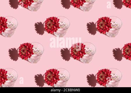 Disegno di un bicchiere con acqua e profondo fiore rosso Dahlia su sfondo rosa. Concetto di fiori minimal in luce dura con ombre. Design artistico. Vista dall'alto,
