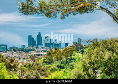 Una vista sulla collina piena di alberi dello skyline di Los Angeles mostra i grattacieli e diversi tipi di aziende. Le colline e gli alberi fanno parte dell'enorme e