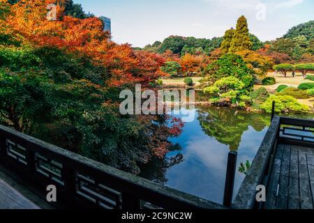 Shinjuku Gyoen park in autunno a Tokyo in Giappone
