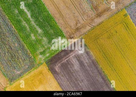 Vista aerea dei droni dei campi coltivati con mais, canola, grano e segala Foto Stock