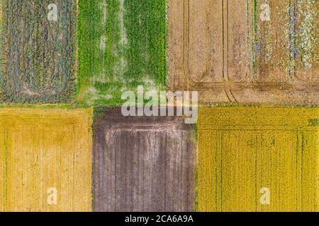 Vista aerea del drone dei campi coltivati con mais verde, canola gialla, grano marrone e segale Foto Stock