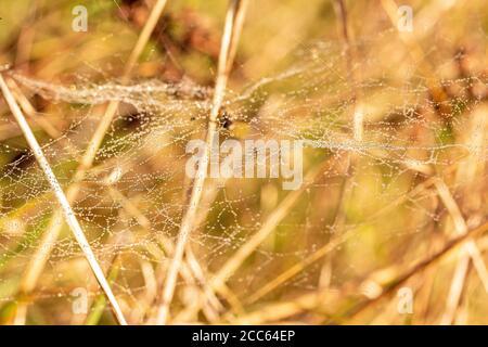 Spider web in autunno umore con rugiada mattutina Foto Stock