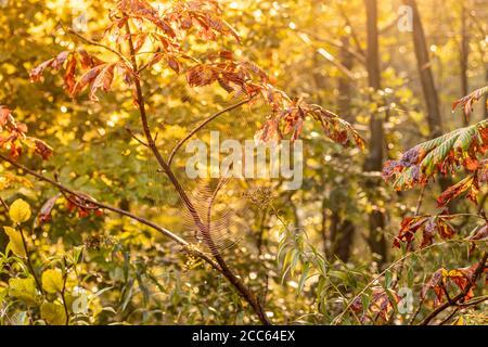 Spider web in autunno umore Foto Stock