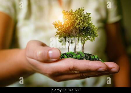La mano della donna che tiene alberi, naturale e concetto di stile di vita ecologico, giardinaggio in ambiente puro e sano