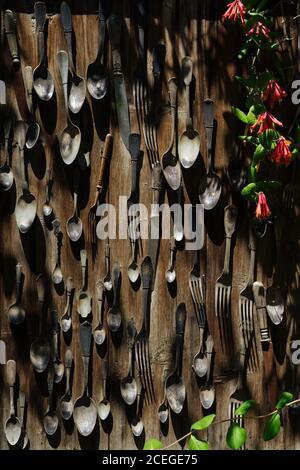 Giardino composizione di cucchiai, forchette e coltelli d'epoca attaccati alla parete in legno appassito con piante intorno il giorno di sole Foto Stock