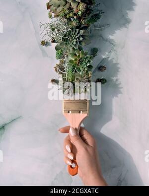 Pennello con vernice di piante succulente Sempervivum. Creativa posa piatta. Luce solare diretta, design a lunga ombra.