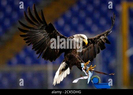 Lazio's mascot, a white headed eagle called Olimpia, lands before the start of the Italian Serie A soccer match against Bologna at the Olympic stadium in Rome March 11, 2012.  REUTERS/Max Rossi (ITALY - Tags: SPORT SOCCER ANIMALS) Foto Stock