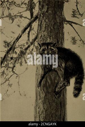 . Vita familiare nel campo e nella foresta; gli animali, gli uccelli, le rane e i salamandri .