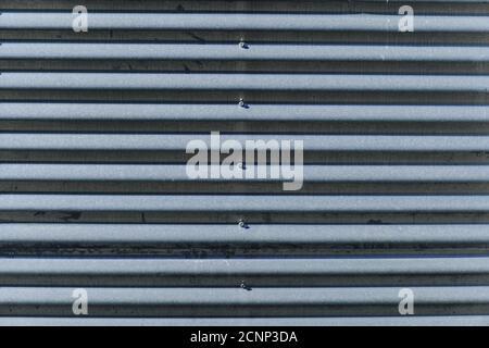 La vecchia parete metallica grigiastra in lamiera con bulloni. La struttura metallica corrugata. Foto Stock