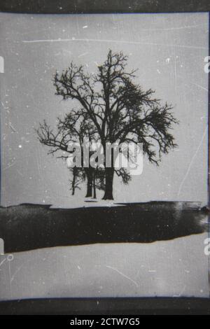 Bella fotografia in bianco e nero degli anni '70 di un albero solitario che cresce in inverno con la neve a terra. Foto Stock