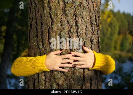 Le mani della donna abbracciano il tronco di pino nella foresta d'autunno Ecologia e ambiente concetto, eco lifestyle - cambiare il mondo, la protezione per la vita e il pianeta
