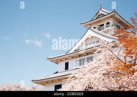 Il castello di Nagahama con fiori di ciliegio in shiga, Giappone Foto Stock