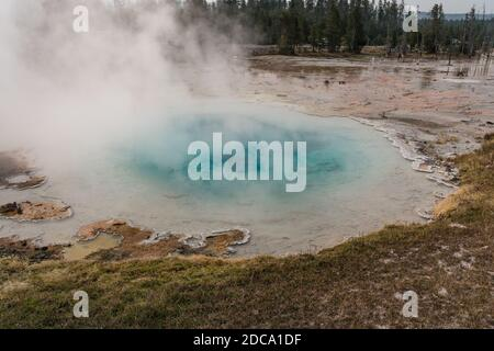 Steam sorge al largo della Silex Spring nel Lower Geyser Basin nel Yellowstone National Park, Wyoming, USA. Foto Stock