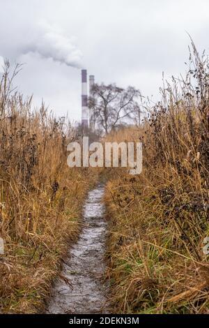 Uno stretto sentiero bagnato tra l'erba secca gialla in un giorno di autunno nuvoloso.
