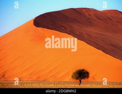 Albero di fronte a una duna di sabbia gigante, Sossusvlei, Namib Naukluft National Park, Namibia