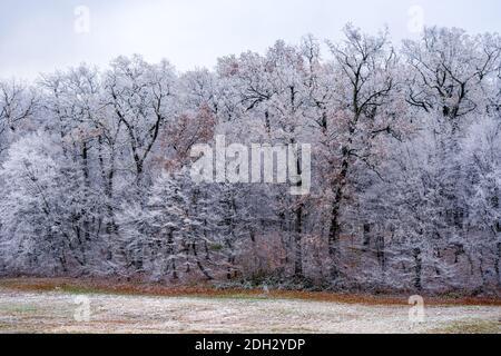 vista della foresta congelata Foto Stock