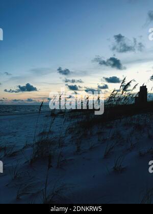 Silhouette piante sulla spiaggia contro il cielo durante il tramonto