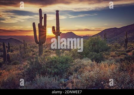 Cactus di Saguaro che cresce sulla terra contro il cielo durante il tramonto