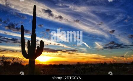 Silhouette Saguaro Cactus Against Sky durante il tramonto
