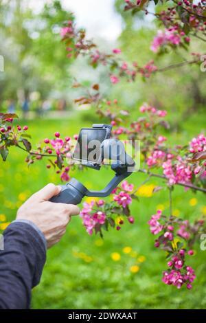 RUSSIA, MOSCA - 13 MAGGIO 2018: Primo piano di uomo blogger mani riprese video su smartphone IPhoneX utilizzando uno stabilizzatore di immagini DJI Osmo Mobile nel giardino di mele rosa fiorito in primavera Foto Stock