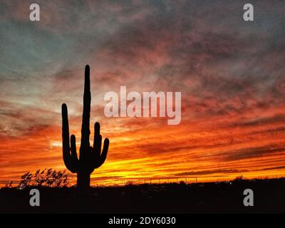 Silhouette di Saguaro Cactus contro il cielo drammatico durante il tramonto
