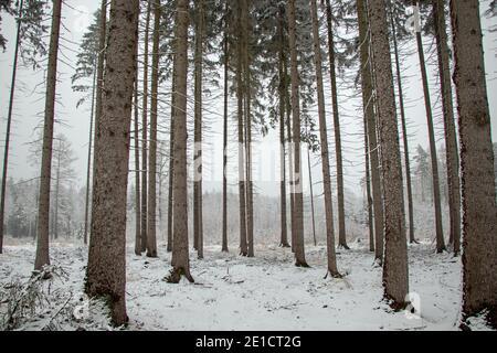 Foresta invernale in Germania idillio della neve Foto Stock