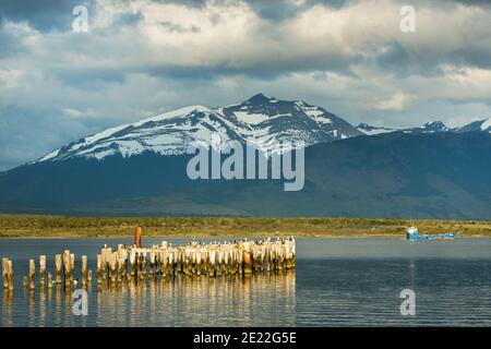Vecchio molo in legno riflesso nelle acque dell'ultima Esperanze Sound / Golfo Almirante Montt Puerto Natales, Patagonia, Cile, Ande e Torres del Paine