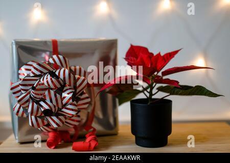 Regalo di Natale in argento con un grande arco rosso e bianco e stella di Avvento (stella di Natale o poinsettie) in rosso di fronte a una catena di luci, romantico, atmosfera Christmassy