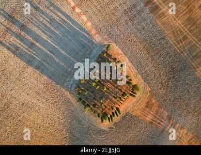Vista aerea verticale di un paesaggio toscano dall'alto. Tramonto colorato su un gruppo di cipressi ombre lunghe. Val d'Orcia, Siena, T
