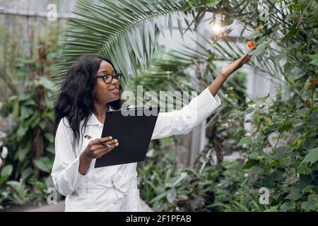 Agronomo professionista della donna africana conduce l'ispezione delle piante, lavorando in serra e fa note negli appunti.