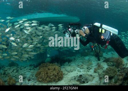 Yellowstripe SCAD, Selaroides leptolepis, scuola in acque poco profonde fotografata da subacquei sotto barca a Papua Ovest Foto Stock