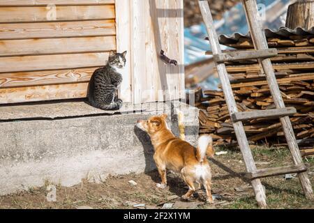Un bel colpo di un gatto peloso e cane che gioca in una giornata di sole
