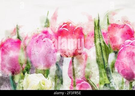 Tulipani rosa in fiore closeup, acquerello immagine d'arte per il design primavera vacanze Foto Stock