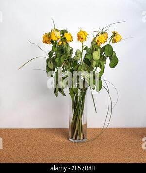 rose gialle appassite in vaso, fondo bianco