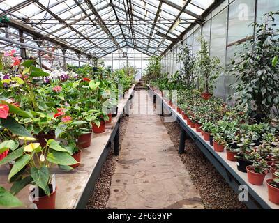 Serra o serra piena di fiori e piante colorate Foto Stock