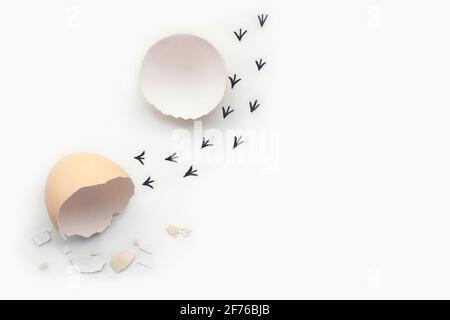 Impronte da un guscio d'uovo. Primi passi di un pulcino su uno sfondo bianco isolato. Concetto di uscita dalla zona di comfort, una nuova vita, progresso